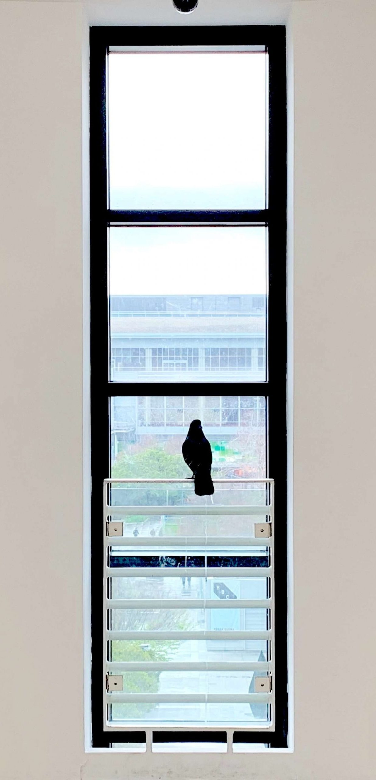 black window frame with a bird sitting in it looking outside